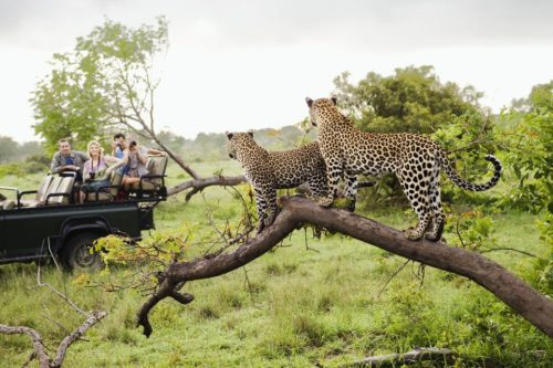 Kruger Safari, Panorama Route Beauty, And Some Action Adventure