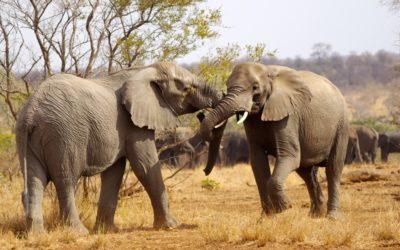 Preparing For Your Safari Tour